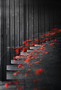 Photographie Fine Art - Passage éphémère de coquelicots