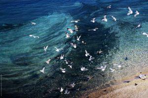 Photographie Nature - Vol de mouettes sur fond de mer