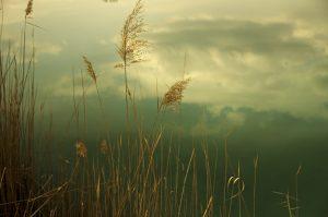 Photographie Nature - Coeur de reflet