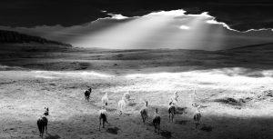 Photographie noir et blanc sur le thème nature