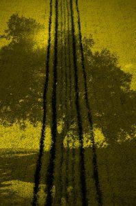 Photographie Fine Art - Ma vision photographique le Colza