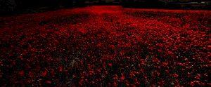 Photographie Nature_Rouge de nuit coquelicot.