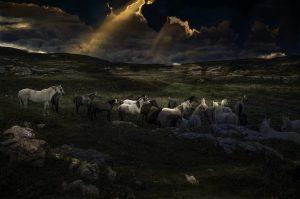 Photographie Fine Art de David-Alexandre Vianey - Les chevaux sauvages du Vercors
