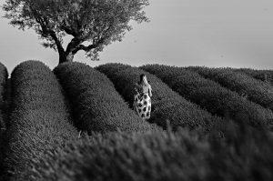 Photographie Portrait de Provence NB