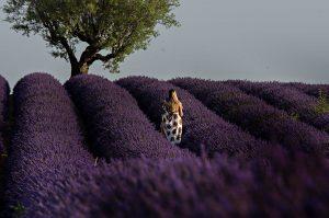 Photographie Portrait de Provence